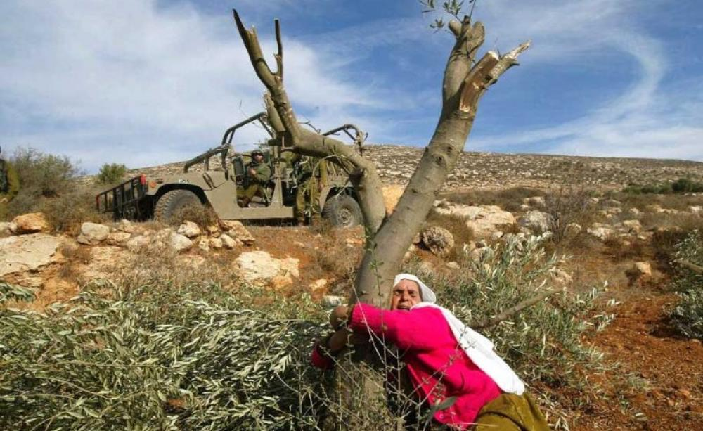Palestinian woman protecting olive tree